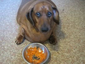 obie comendo cenouras
