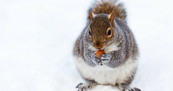 Dicas para manter a saúde durante o inverno