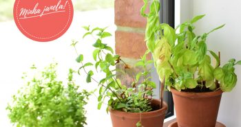 Horta em casa na janela EmagrecerCerto